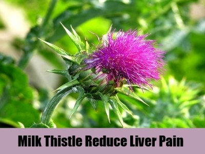 Milk thistle And liver cleansing