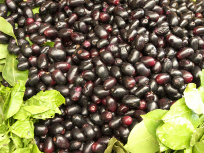 Specific Uses Of Jamun (Jambul) For Healing
