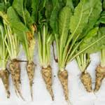 The Unbelievable Benefits Behind Chicory