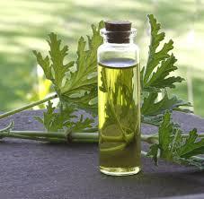 Evolution of Western Herbalism