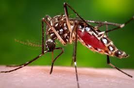 """The world has experienced a new virus """"Zika"""""""