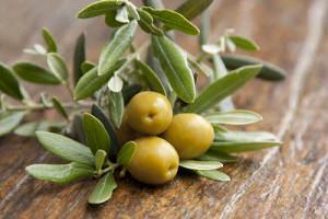 olives and leaves-omuzabibu